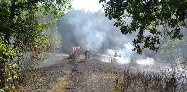 В Воронежском заповеднике сгорели гектары леса