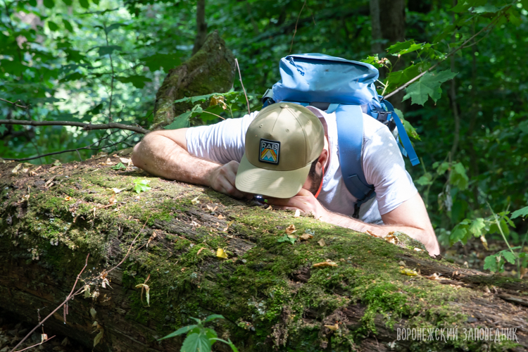 ForBio and UiB Dead Wood Course 2019 | Voronezhsky State Nature
